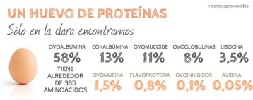 proteinas-clara-huevo