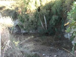Interior del estanque con varias cuevas y vegetación.
