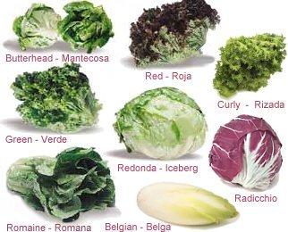 Encuentran restos de pesticidas en el 80 65 de lechugas escarolas y r cula de supermercados - Diferentes ensaladas de lechuga ...