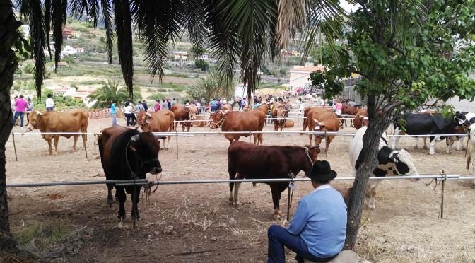 La Feria de ganado y la biodiversidad genetica