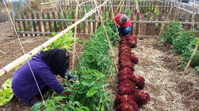 Alumnas de Capacitación Agraria mantienenen el Huerto Social y Ecológico de Santa Brígida
