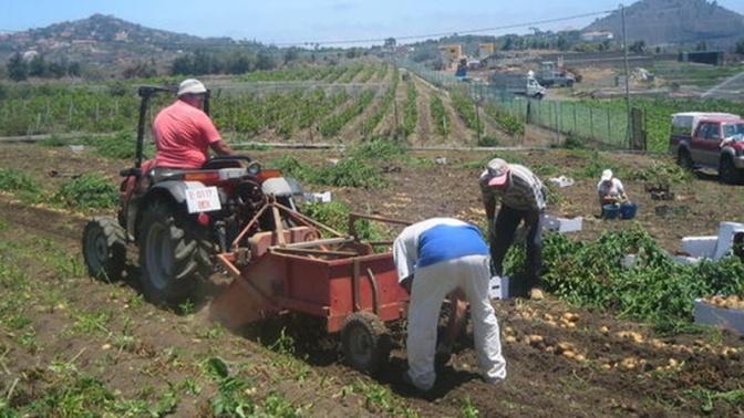Alertan de que la Ley del Suelo amenaza el futuro de la agricultura en Canarias