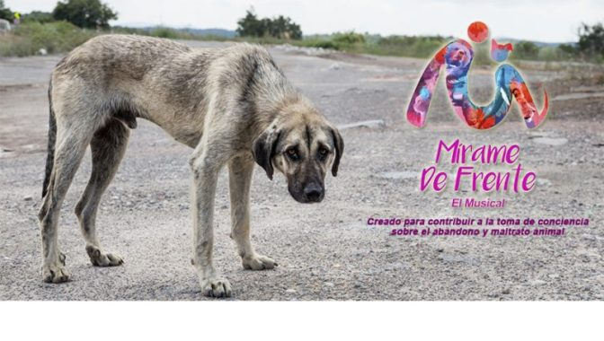 Los animales no son juguetes: Por la tenencia responsable de mascotas