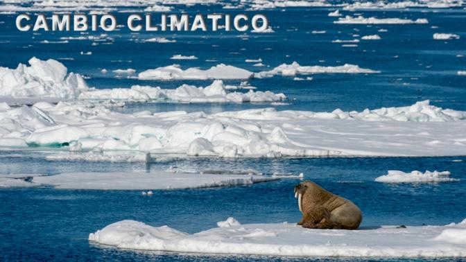 Déjalo ir: el Ártico nunca más se congelará